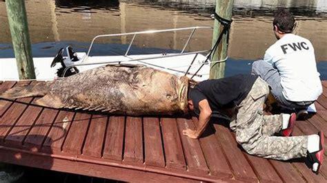 grouper dead found canal lb florida wgrz