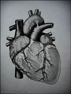 The 25+ best Human heart drawing ideas on Pinterest ...