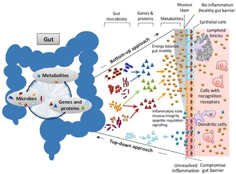 Our gut microbiome is always changing; it's also