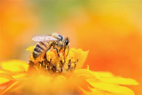 bee stings  allergies prevention  treatment tips