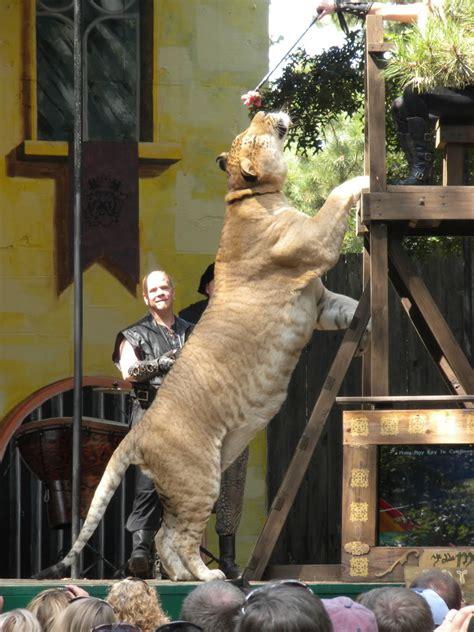 heres  liger    lion   bigger