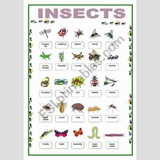 Insects Picture Vocabulary  Esl Worksheet By Lolelozano