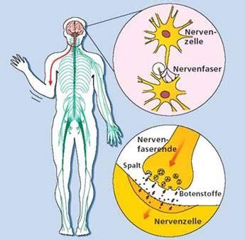 parkinson ursachen  symptoms treatment