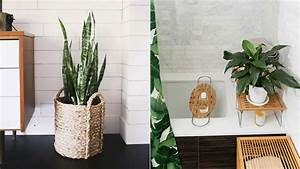 The 10 Best Bathroom Plants To Thrive In High Humidity Areas