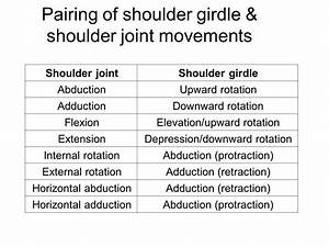 Review of the Shoulder Complex - ppt video online download