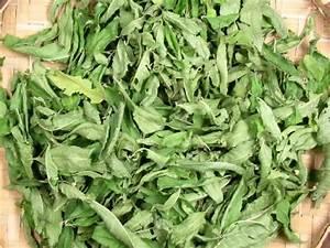 Verveine Plante Tisane : verveine biologique achat vente plantes verveine biologique 50 grammes ~ Mglfilm.com Idées de Décoration