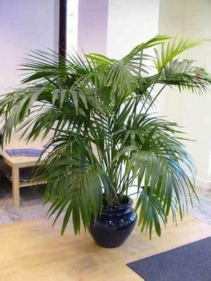 le pour plante d interieur f 233 vrier 2013 tendance design et d 233 co