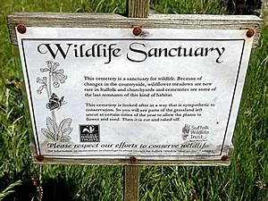 St Peter U0026 39 S Church Wildlife Sanctuary     U00a9 Adrian Cable