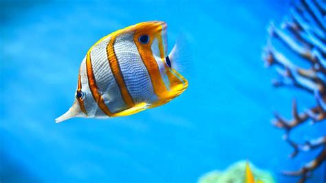 3d Animated Fish Wallpaper - animated fish wallpaper