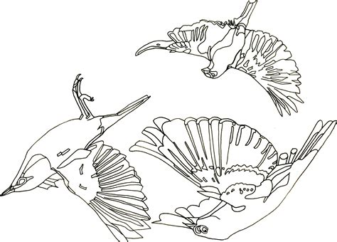 flying bird drawing   clip art