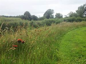 Wildflower meadow with mown path. http://designswithnature ...