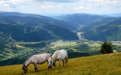 Animal Scenery Wallpaper - scenery mountains grasslands horses two animals nature