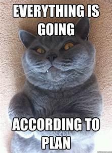 Evil Cat memes | quickmeme