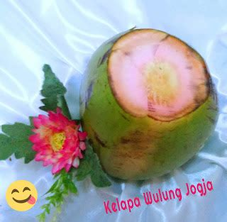 bibit kelapa wulung degan wulung kelapa serat merah