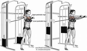 Standing Cable Chest Press Instructions And Video