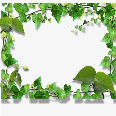 framing leaves leaves border frame green png and psd file for free download