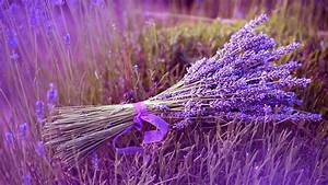 Lavender Flowers - Wallpaper, High Definition, High ...