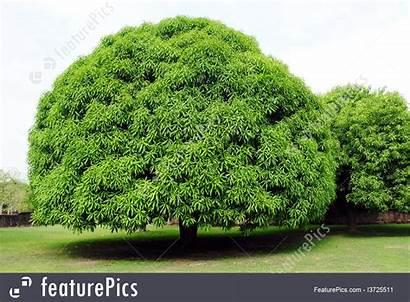 Round Trees Park Featurepics Plants Sukhothai Thailand