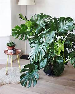 Zimmerpflanzen Für Dunkle Räume : 16 best zimmerpflanzen images on pinterest ~ Michelbontemps.com Haus und Dekorationen