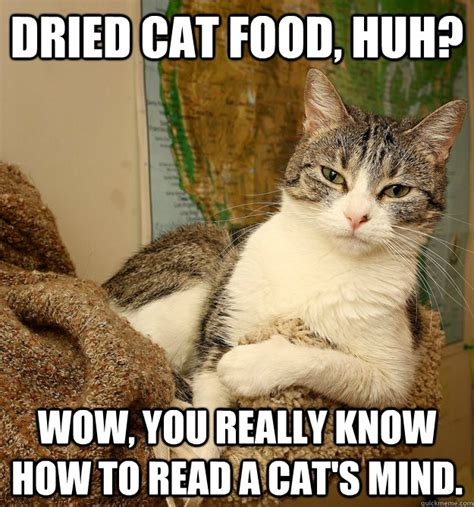 Food Cat Meme - dried cat food huh wow you really know how to read a cat s mind disdainful cat quickmeme
