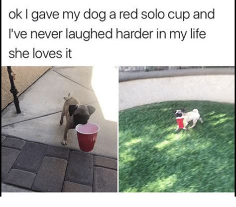 Red Solo Cup Meme - ok i gave my dog a red solo cup and i ve never laughed harder in my life she loves it life