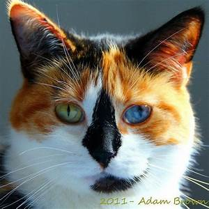 1000+ images about calico mixed with tabby on Pinterest ...