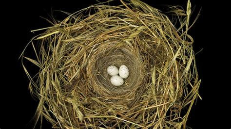 Stunning Images of Birds' Nests | Mental Floss