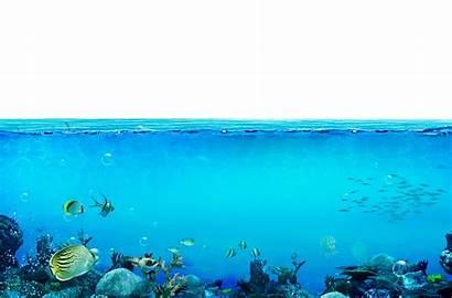 Underwater Transparent Ocean Sea Water Deep Fond