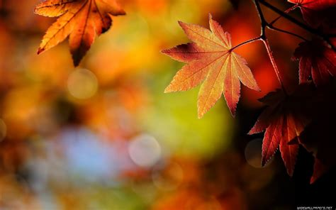 pictures of autumn leaves autumn leaves desktop wallpapers wallpaper cave