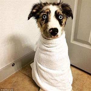 Traumatised pets pictured after their baths | Daily Mail ...