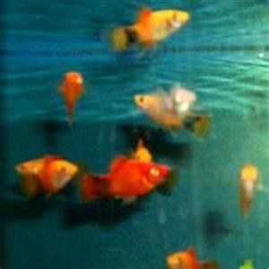 Süßwasserfische Fürs Aquarium : das abc der aquarienarten f r kinder im ~ Lizthompson.info Haus und Dekorationen