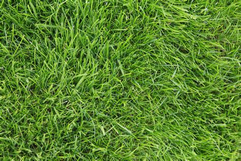 Drought Tolerant Lawn Grass