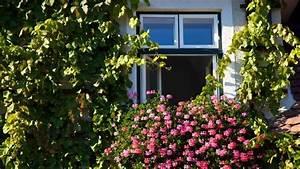 Rankpflanzen Winterhart Immergrün : kletterpflanzen vielseitige allesk nner f r garten und ~ A.2002-acura-tl-radio.info Haus und Dekorationen