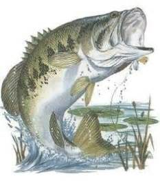 How To Draw A Bass Boat Step By Step by Bluegill Drawing Sources Been There Done That Just