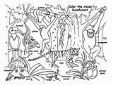 Rainforest Coloring Fauna Animals Animal Sketsa Gambar Forest Layers Contoh Template Printable Tropical Jungle Sheets Books Drawing Martinchandra Habitat Plants sketch template