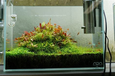Aquascape Ada - simon s aquascape