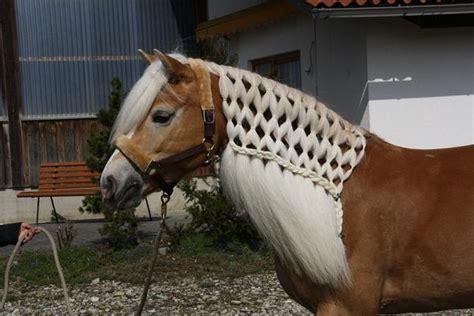 frisuren fuer pferde frisur pflege