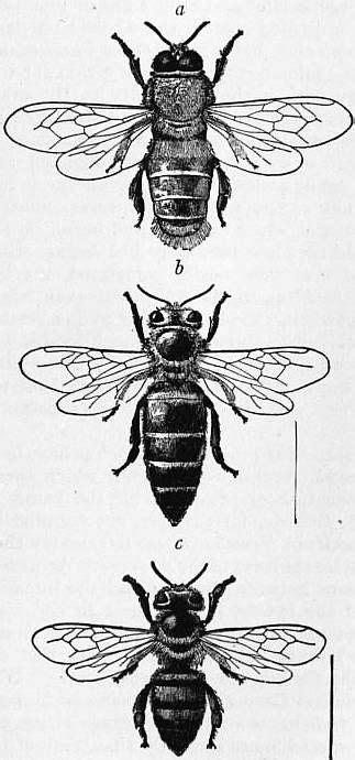 The Project Gutenberg eBook of Encyclopædia Britannica, Volume III Slice V - Bedlam to Benson