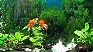 Freshwater Aquarium 2D HD - YouTube