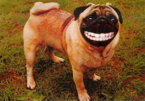 Funny Dog With Teeth On My Planet Pinterest