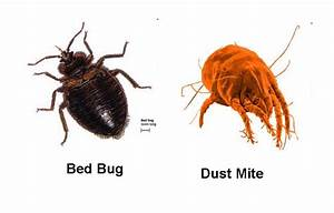 bed bugs control guides march 2011 With do bed bugs come from dirt