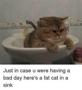 Cat Bad Day Meme