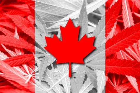 medical cannabis  pain  canada