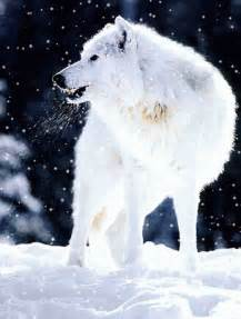 Animated White Wolf