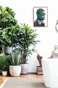 Large Indoor Plants For Sale Gorgeous Tall Indoor Plants