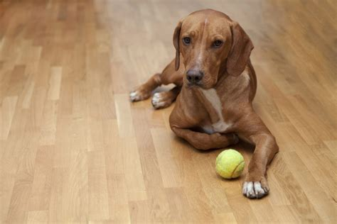 best hardwood floors for dogs best hardwood floors for owners city floor supply 7704