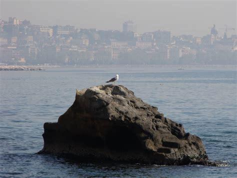Ristorante Il Gabbiano Napoli Gabbiani Sul Lungomare Di Napoli