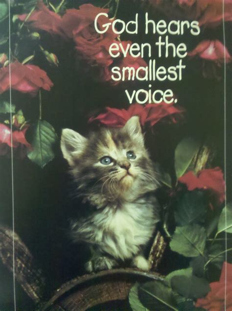 This kitten is praying because he is shipwrecked in a rose