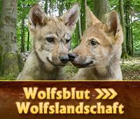 wolfsblut hundefutter trockenfutter und nassfutter