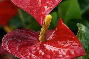 Pflanzen Die Viel Sonne Vertragen Und Wenig Wasser Brauchen : welche pflanzen brauchen wenig sonne welche pflanzen brauchen wenig sonne cool welche pflanzen ~ Frokenaadalensverden.com Haus und Dekorationen